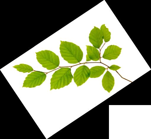 Paysagiste, Cloture végétale & terrasse Bassin Arcachon et Biscarosse